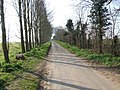 Leys Lane - geograph.org.uk - 380043.jpg