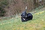 Lilo a Wesley an der Péitruss-108.jpg