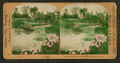 Lily Pond, Tower Grove Park, St. Louis, Mo. U. S. A., by Singley, B. L. (Benjamin Lloyd).png