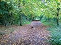Lime tree avenue on Hardwick Heath.jpg