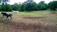File:Lipica Stud Farm.webm