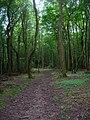 Little Calem Wood - geograph.org.uk - 505356.jpg