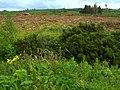 Logging near Meencargagh - geograph.org.uk - 868050.jpg