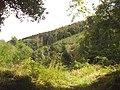 Lower Helland Wood - geograph.org.uk - 51071.jpg