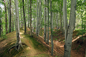 Golensizi - Golensizi gord in Lubomia (Poland)