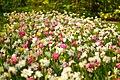 M^m Flores en el parque en la Haya - Creative Commons by gnuckx - panoramio (6).jpg