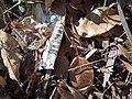M & M wrapper leaf litter.jpg
