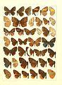 Macrolepidoptera15seit 0273.jpg