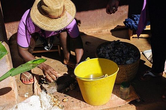 Madagascar silk workshop. Washing cocoons.jpg