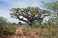 Madlabantu Trail 02.jpg