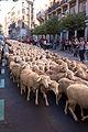 Madrid - XX fiesta de la trashumancia - 131006 105059.jpg