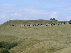 a herd of cows grazing on a grassy hillside