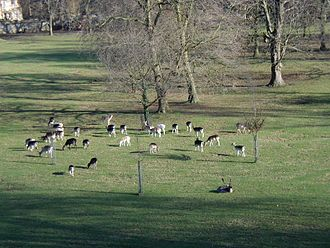 Magdalen College, Oxford - The deer in the Grove