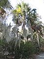 Magnolia Plantation and Gardens - Charleston, South Carolina (8556519728).jpg