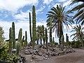 Mammillaria prolifera - Oasis Park botanical garden - Fuerteventura - 01.jpg