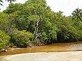 Manguezal no estado Alagoas.jpg