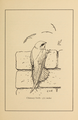Manual of Bird Study 0025.png