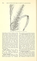Manual of the grasses of the United States (Page 722) BHL42021361.jpg