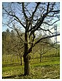 March Denzlingen - Master Season Rhine Valley Photography 2013 - panoramio (7).jpg