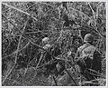 Marines of G Company, 2d Battalion, 4th Marines near Hill 479, August 1967 (15585274924).jpg