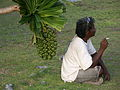 Marshall Islands PICT0392 (4744732319).jpg