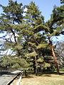Wikipedia japan wikinews de for Japanische zierfische