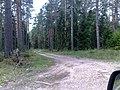 Meža ceļu krustojums - panoramio.jpg