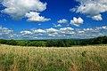 Meadow Walk (6) (8994321612).jpg