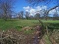Mid Devon , Knightshayes Scenery - geograph.org.uk - 1272054.jpg