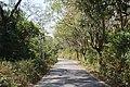 Mid Road of Saatchori National Park, Hobigonj, Sylhet, Bangladesh.jpg