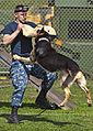 Military working dog training exercises 130410-N-WF272-078.jpg