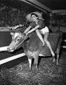 Milky Way (dairy) exhibition, Sydney Town Hall, 12 August 1955 Ern McQuillan.jpg