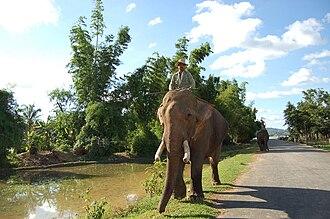 Mnong people - Mnong's elephant carer