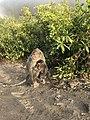 Monkey Mount Batur.jpg