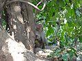 Monkey baby tree.jpg