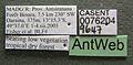 Monomorium termitobium casent0076204 label 1.jpg
