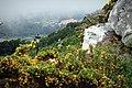 Monte de Santa Tecla - panoramio.jpg