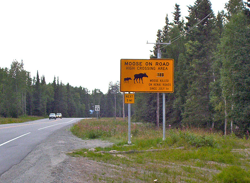 Moosecrossingkenaiak.JPG