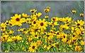 More Spring Color (99804113).jpeg