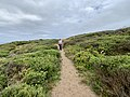 Mornington Peninsula Walk, Bridgewater Bay, Blairgowrie, Victoria, Australia 03.jpg