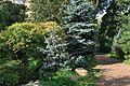 Moscow BotanicalGarden 2611.jpg