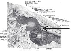 張 筋 鼓膜