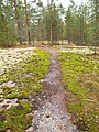 Muuratsalo - trail.jpg