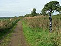 NCN milepost at Lyneside - geograph.org.uk - 248307.jpg