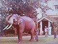 Nadungamuwe Raja-1978.jpg