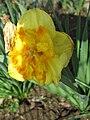 Narcis (22).jpg
