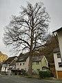 Naturdenkmal Winterlinde Sauerthal .jpg