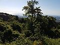 Nature Corsica.jpg