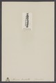 Nerinea bisulcata - - Print - Iconographia Zoologica - Special Collections University of Amsterdam - UBAINV0274 005 08 0056.tif