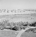 Nieuwe beplanting aan de stadsrand van Bersjeba, Bestanddeelnr 255-3501.jpg